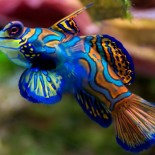 Top 10 Most Beautiful Fishes Under the Sea
